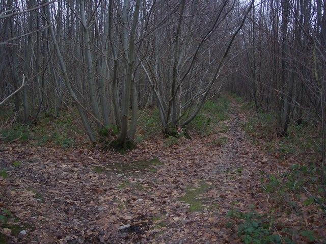 Footpath junction in Mounts Wood