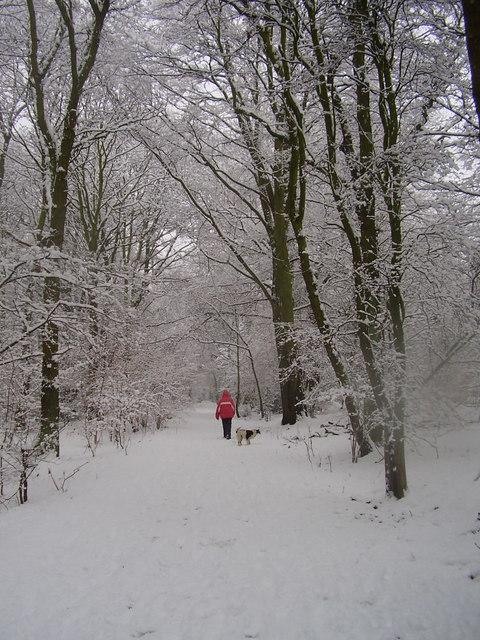 Snowy Sandall Beat