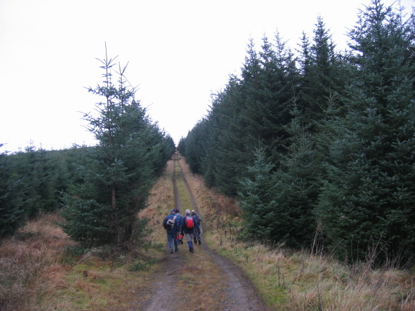 Forest Track near Dun's Moss