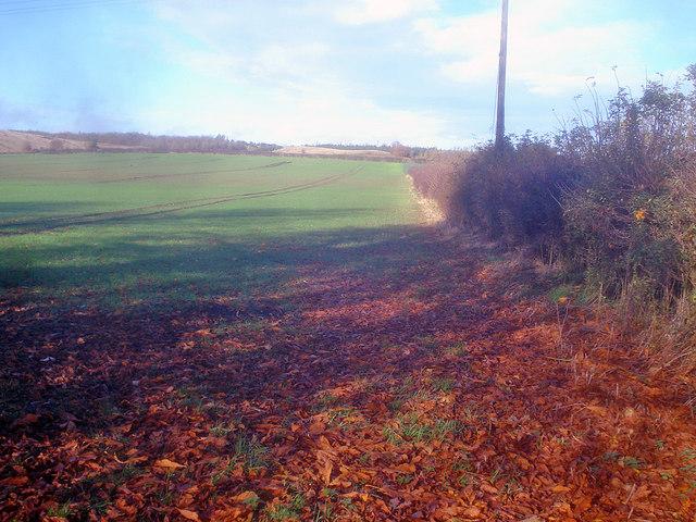 Arable land north of Abbey Fields Farm - 1