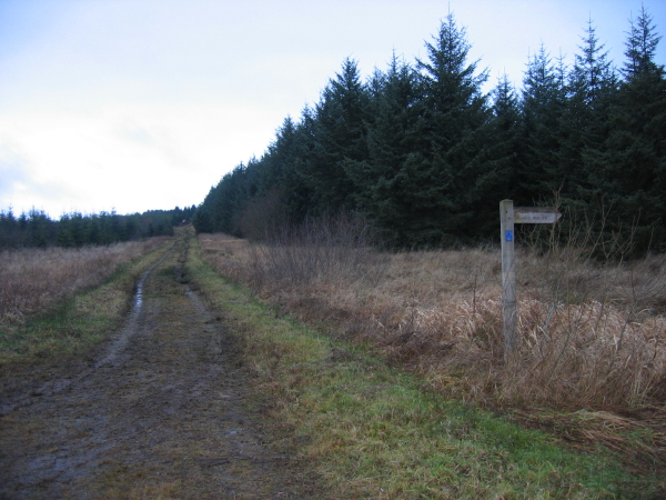 Forest Track and Footpath Sign