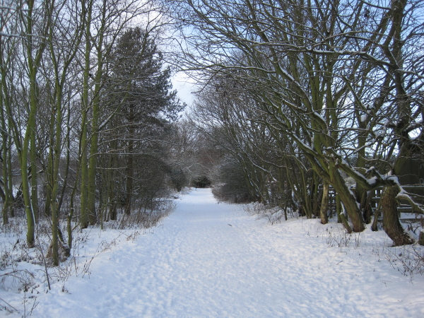 Great North Forest Trail near Beamish