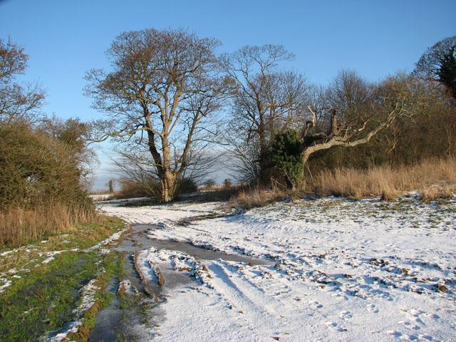 Bridleway to Transport Lane