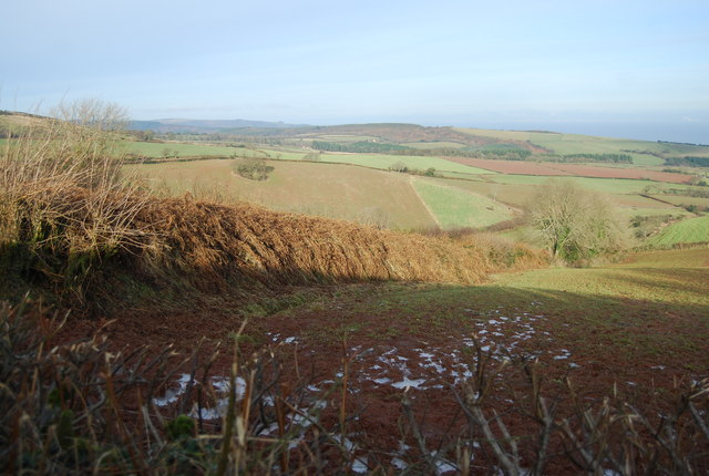 Hedgerow running north down the hill