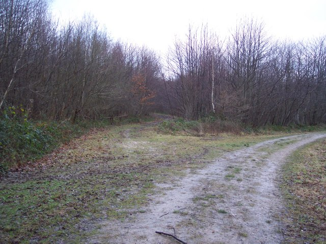 Track junction in Denge Wood