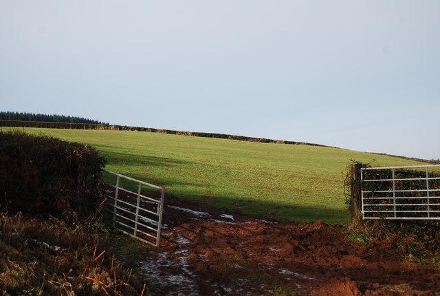 Field west of Stouts Way Lane