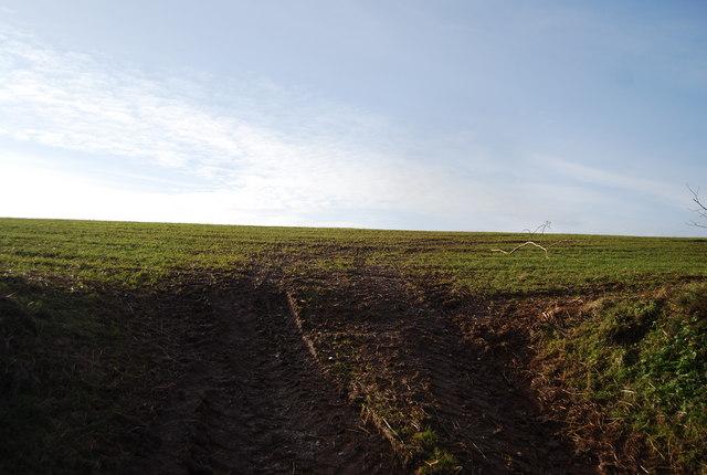 Field east of Stouts Way Lane
