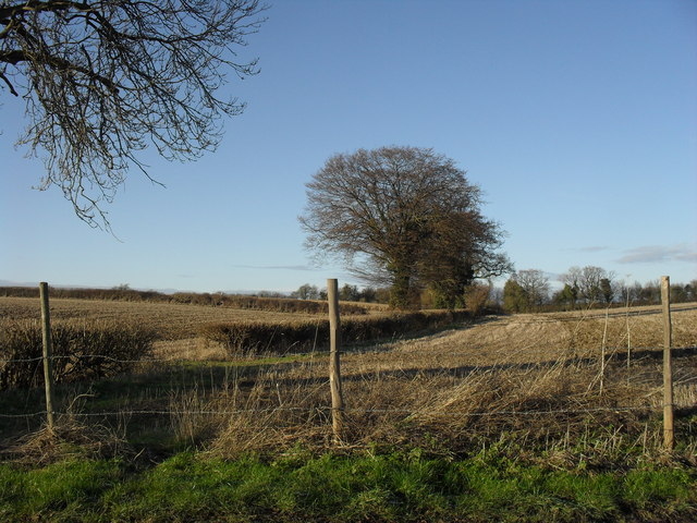 Field beside the road to Minster Lovell