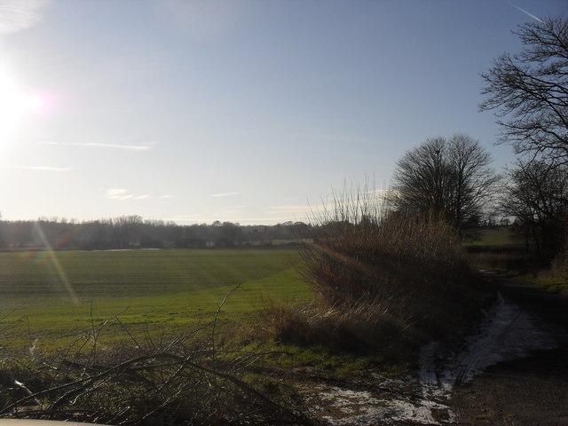 Field alongside the road to Minster Lovell
