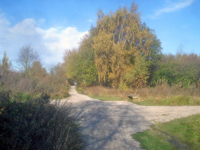The Linby Trail - 1