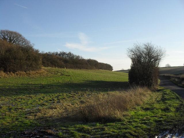 Field beside Rising Lane