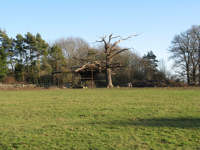 Dead tree and open barn at Denne Park