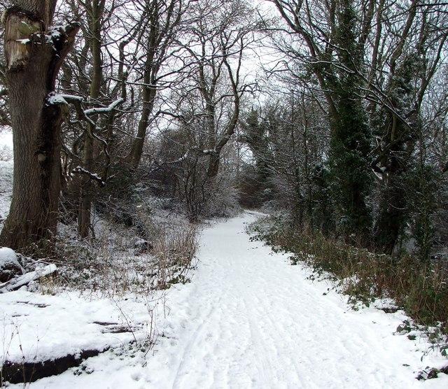 Footpath through Holywell Dene