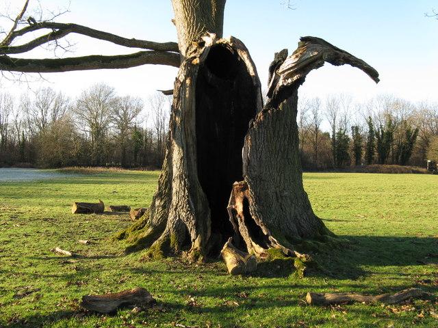 Tree damage on the Denne Park estate
