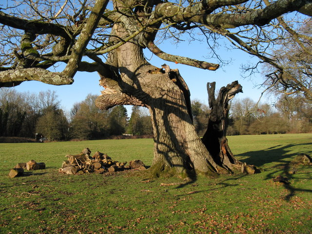 Tree damage on the Denne Park estate