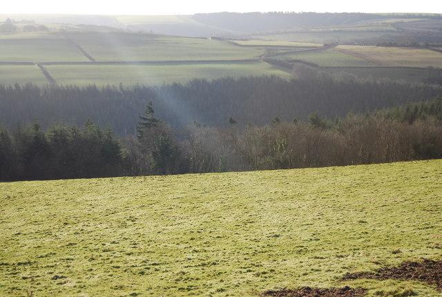 The edge of Beckway Wood