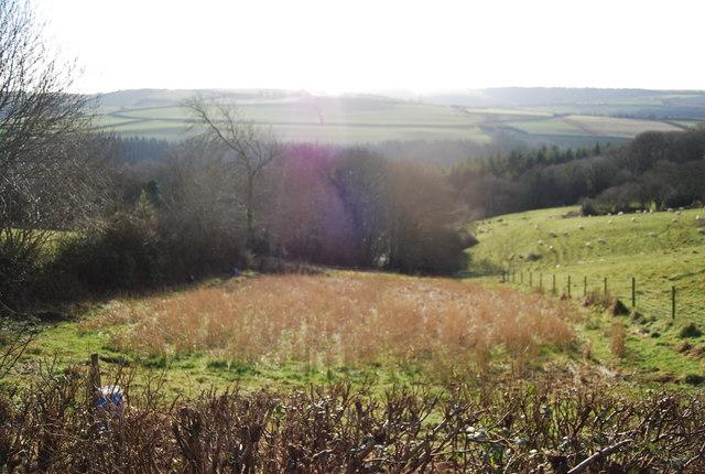 Beckway Wood