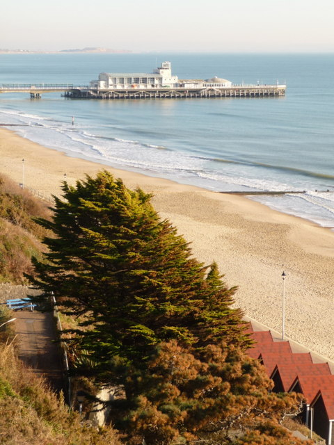 Bournemouth: a West Cliff tree and the pier