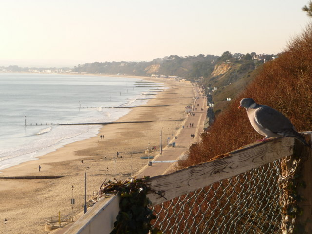 Bournemouth: a pigeon enjoys the sea view