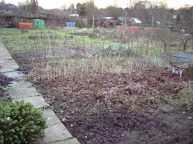 Earlsdon allotment plot in winter.