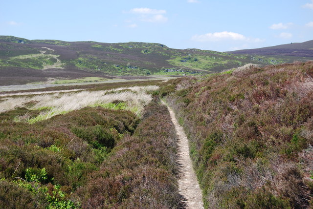 A walkers path across Cerrig Coediog