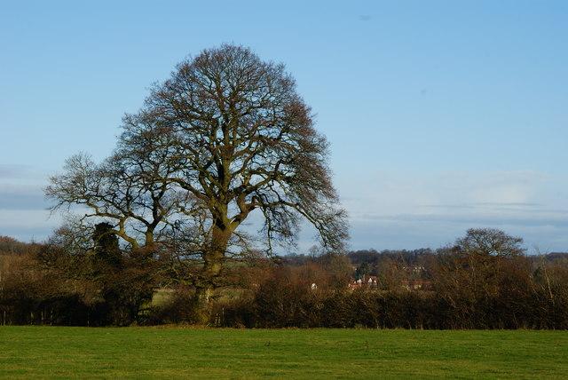 View Towards Bentley, Hampshire