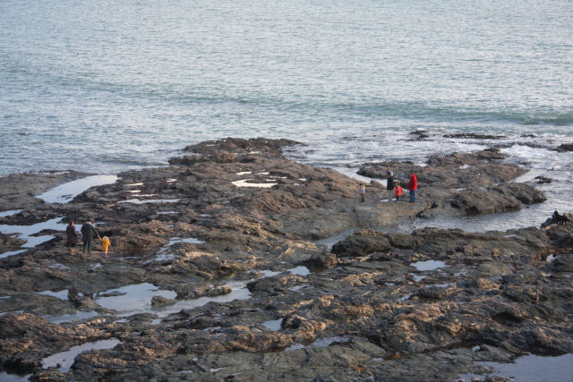 Rockpooling at King's Cove
