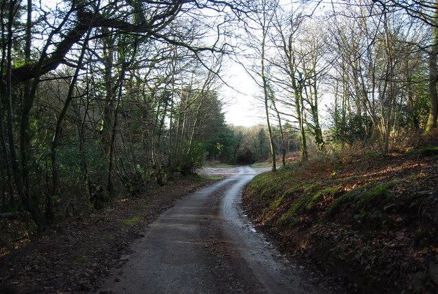 Stouts Way Lane entering Druid's Combe Wood