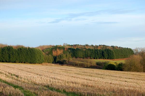 Estate plantation south of Staverton