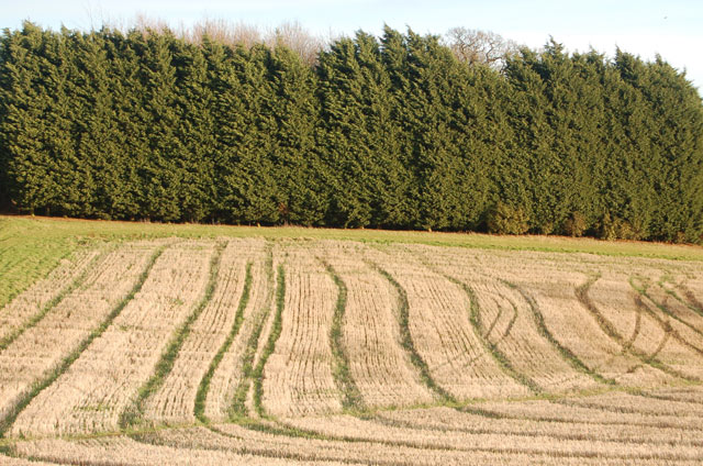 Tractor tracks in field of stubble, Staverton