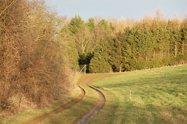 Track into a plantation south of Staverton