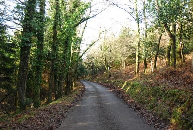 Stouts Way Lane descends through Slowley Wood