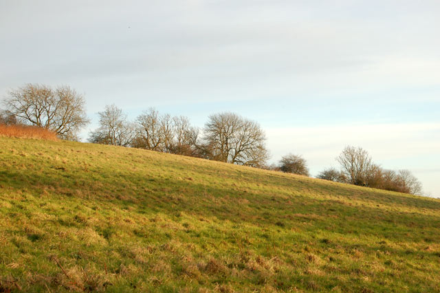 Evening sun on a hillside south of Staverton
