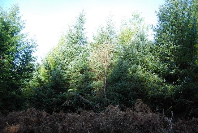 Slowley Wood