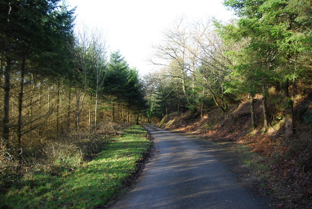 Stouts Way Lane descends through Slowley Wood