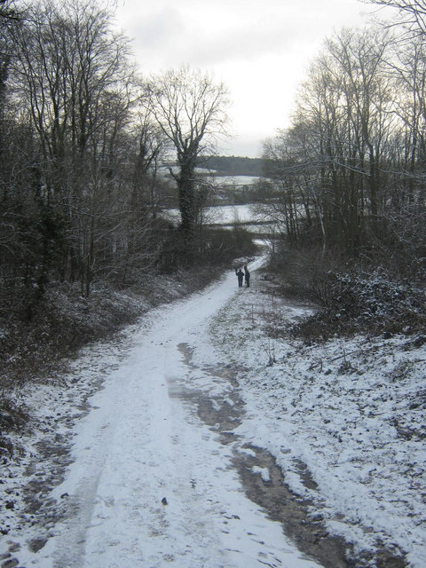 Bratt Wood and the Yorkshire Wolds Way, Nunburnhlome, East Riding, Yorkshire