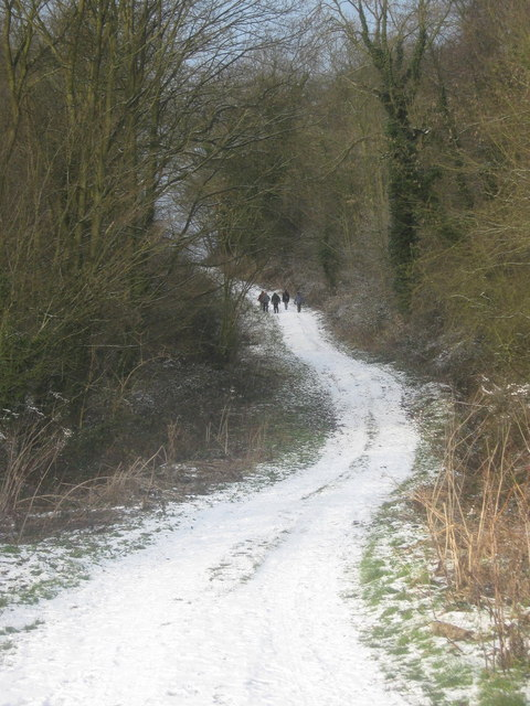 Bratt Wood from the road! Nunburnholme, East Riding, Yorkshire