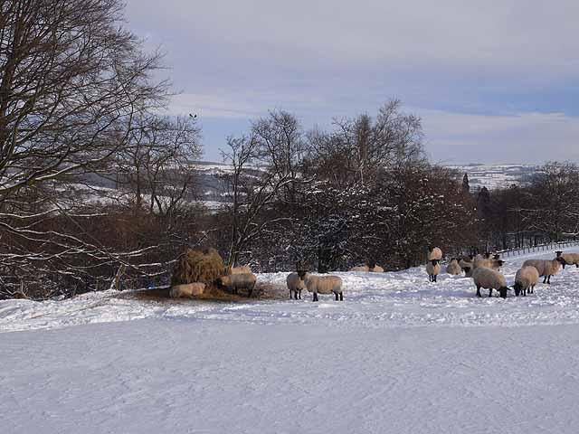 Sheep feeder, above Loughbrow House