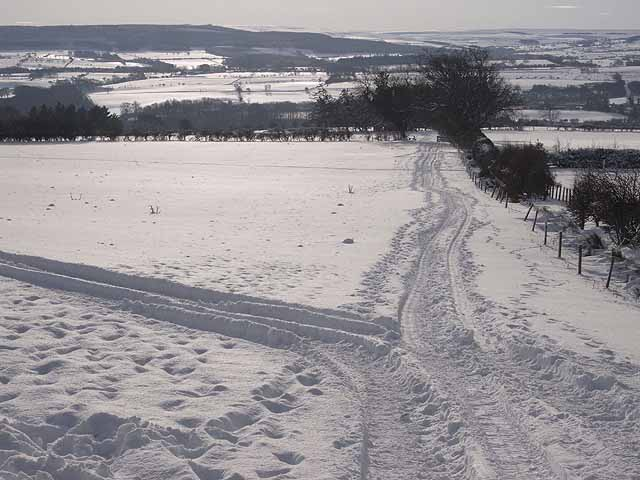 Tracks in the snow, Hexhamshire