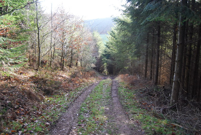 Footpath descends through Druid's Combe Wood
