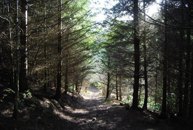 Footpath in Druid's Combe Wood