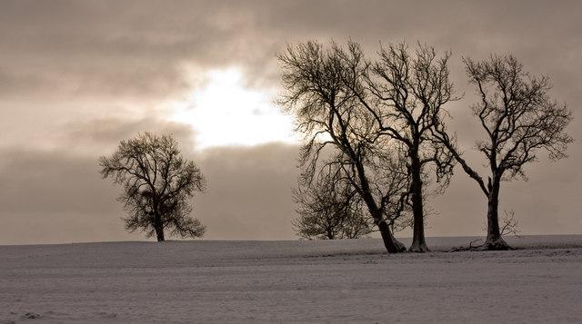 Trees from Leacett Lane