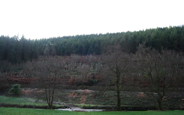 New plantings on the edge of Birchen Wood