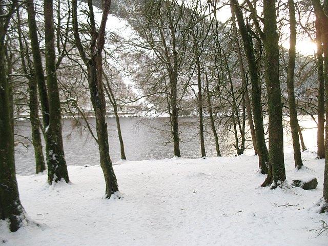 Woodland beside Loch Oich