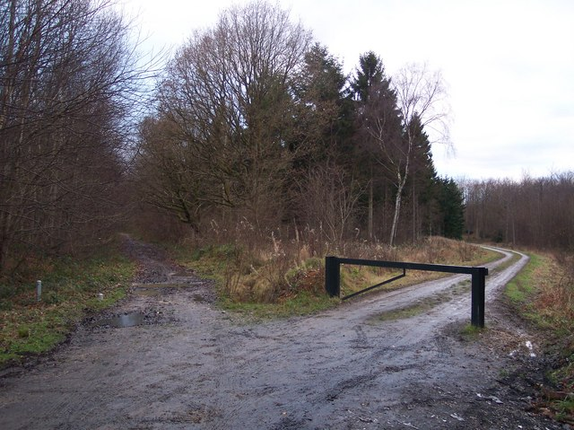 Track junction on a byway in Eggringe Wood