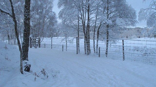 Deer fence, Invervigar