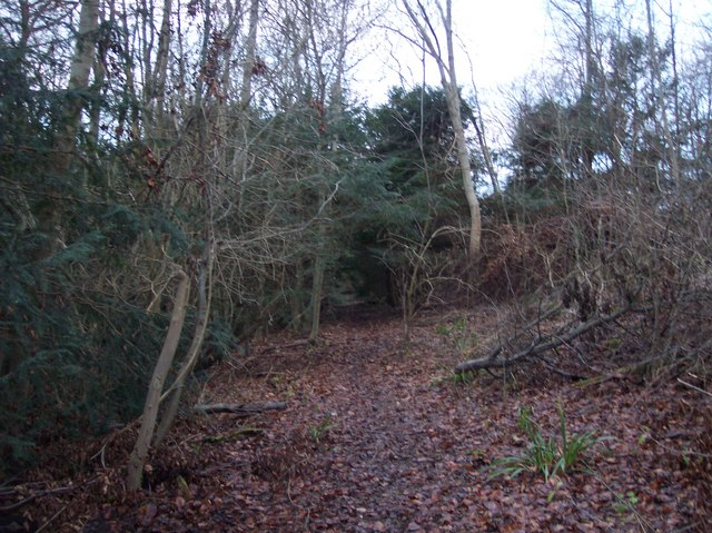 Footpath in Eggringe Wood