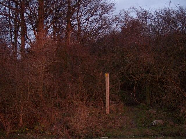 Footpath enters Eggringe Wood