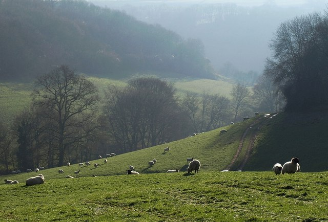 Marlees Brook valley