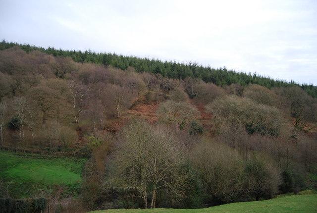 Monkham Wood